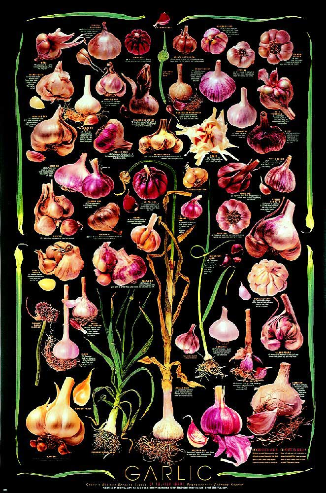 Garlic (Black) Poster