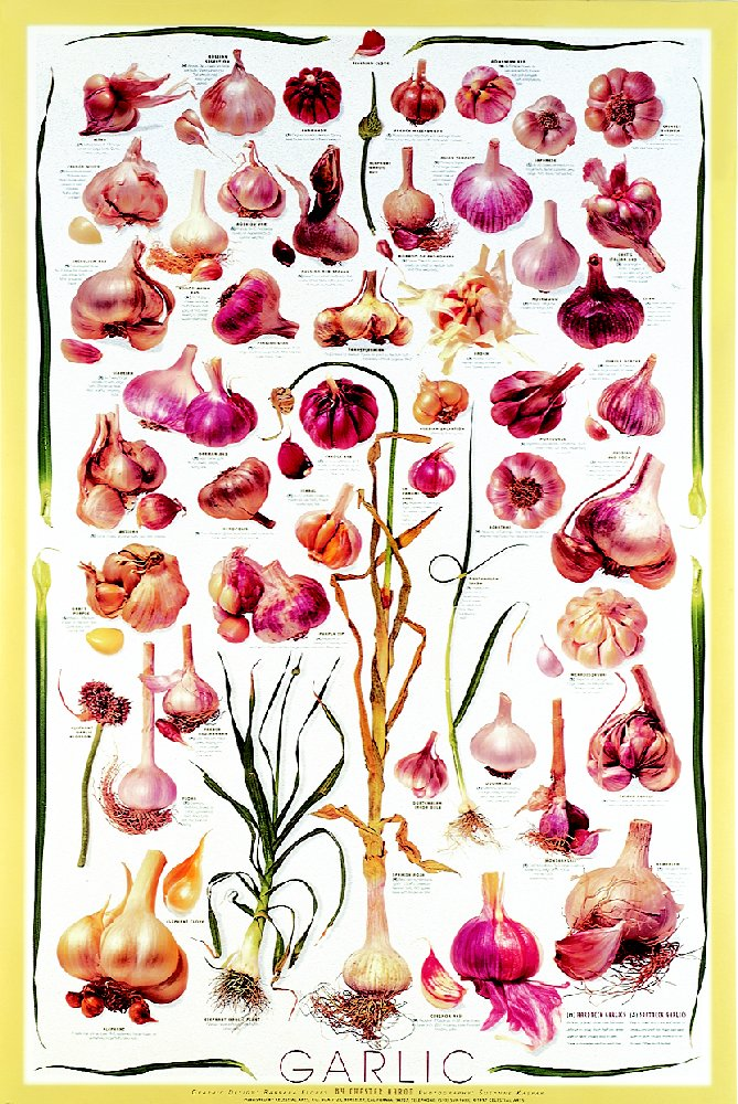 Posters - Garlic Posters